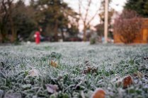 Frosty grass in the early morning