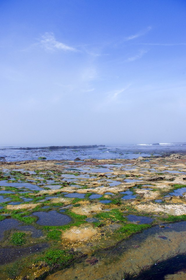 So many tidal pools to explore!